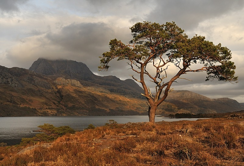 Pine for Slioch - Fisherfield & Letterewe