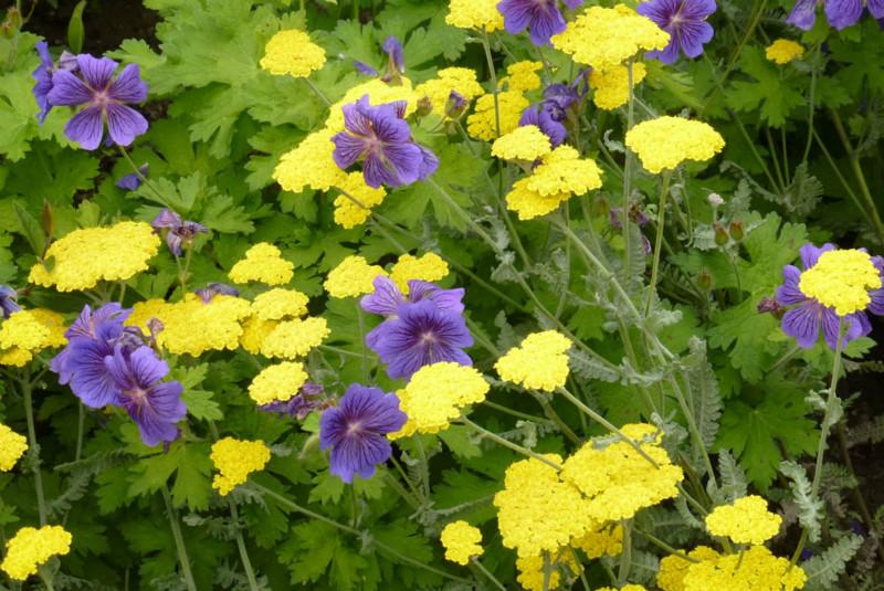 Purple Yellow  Green - Malcolm Reed