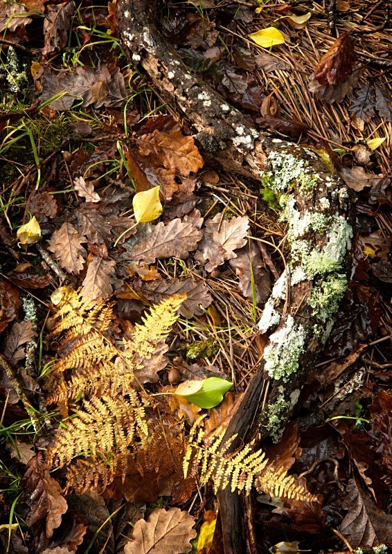 Autumn Floor, Derrycunnihy Woods, Killarney, Co Kerry - Elements of The Landscape
