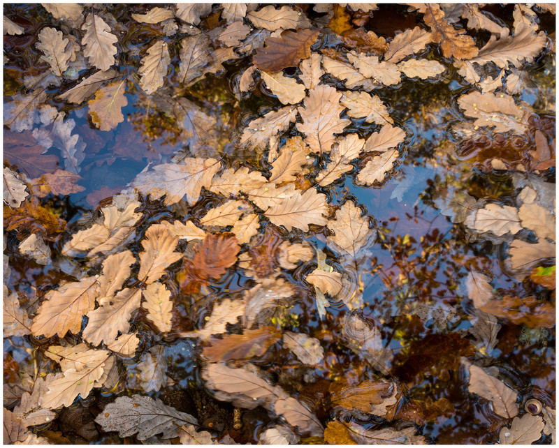 Autumn Patterns! - 12 Recent Images