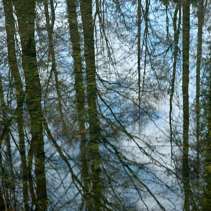Reflections on the Shimna River, Co Down - Elements of The Landscape
