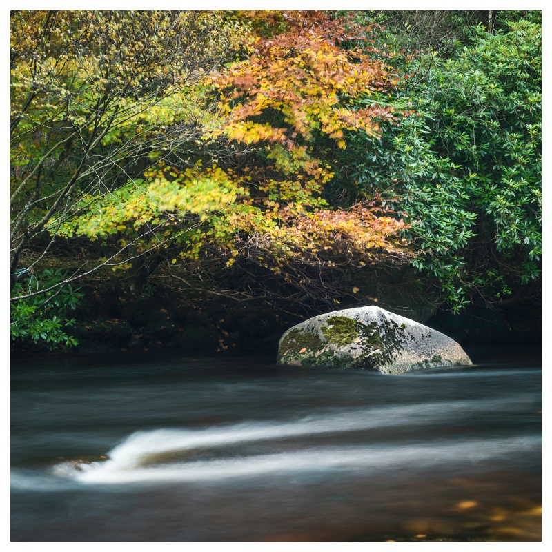 Autumn Colours on the Avonmore River, Co Wicklow - Leinster's Wild Landscape