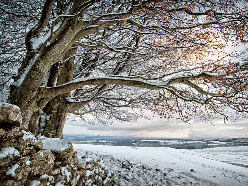 Winter beech on the fell during Photography Workshops