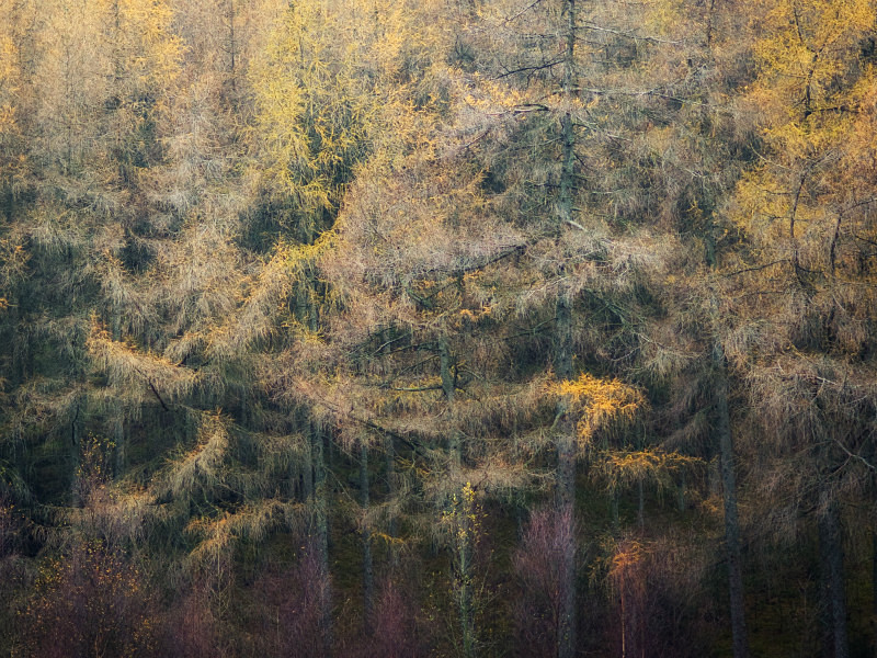 lakeland larches - Abstracts
