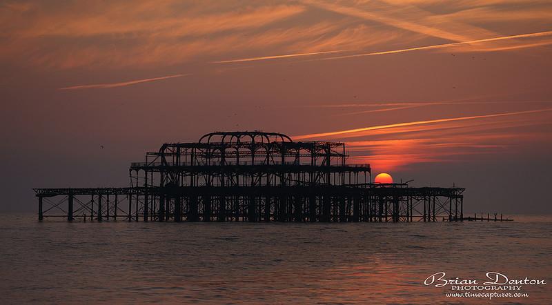 Birdcage - Sussex & Brighton