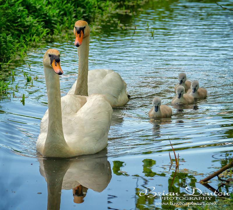 Family Group - Nature & Wildlife
