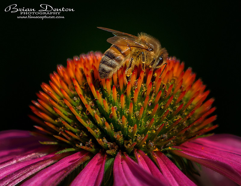 Pollen Poaching - New Images