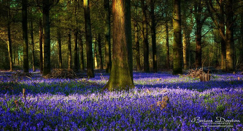 The Blue Carpet - Nature & Wildlife