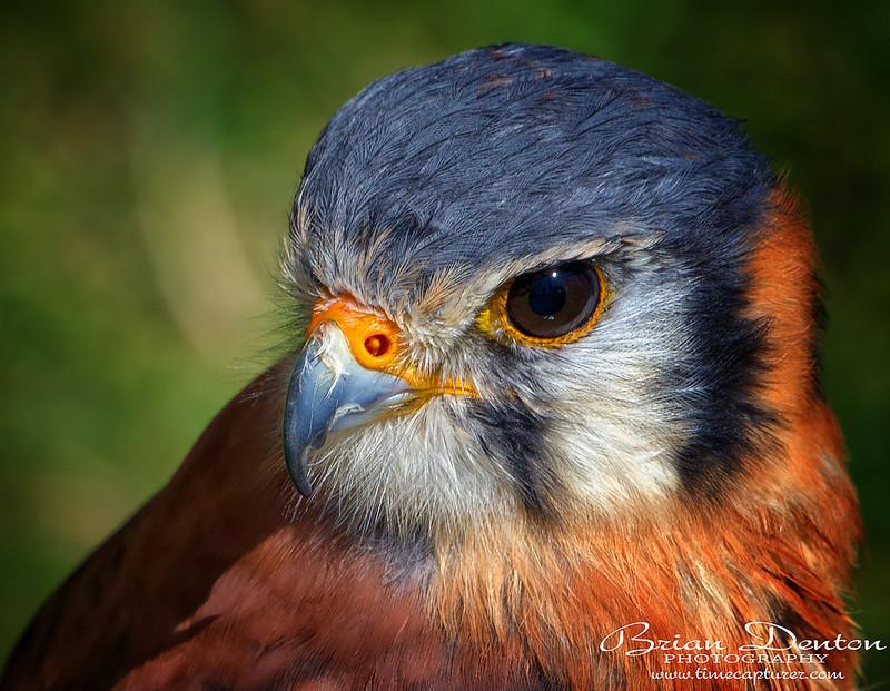 Look Away - Nature & Wildlife