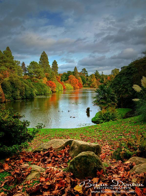 Autumn Leaves - England