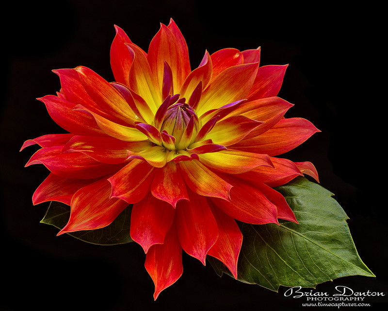 Flower Flame - Macro Photography