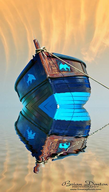 Blue Dolphins - Creative