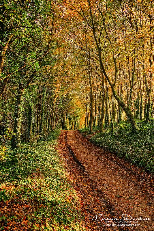 Woodland Autumn - Nature & Wildlife
