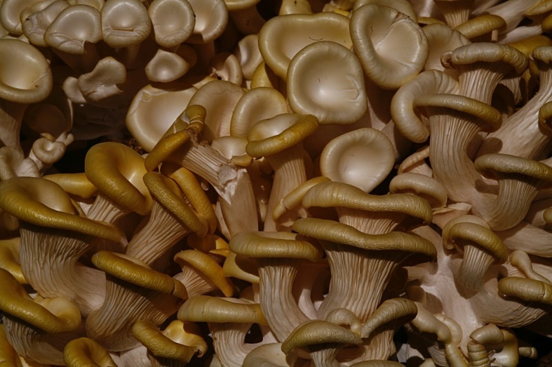 Mushroom set - Product