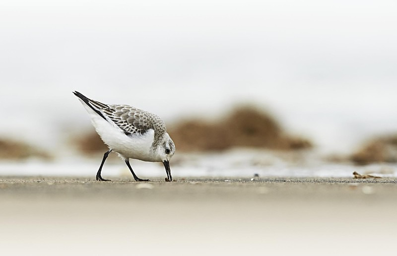 Sanderling, Norfolk - Coastal stuff