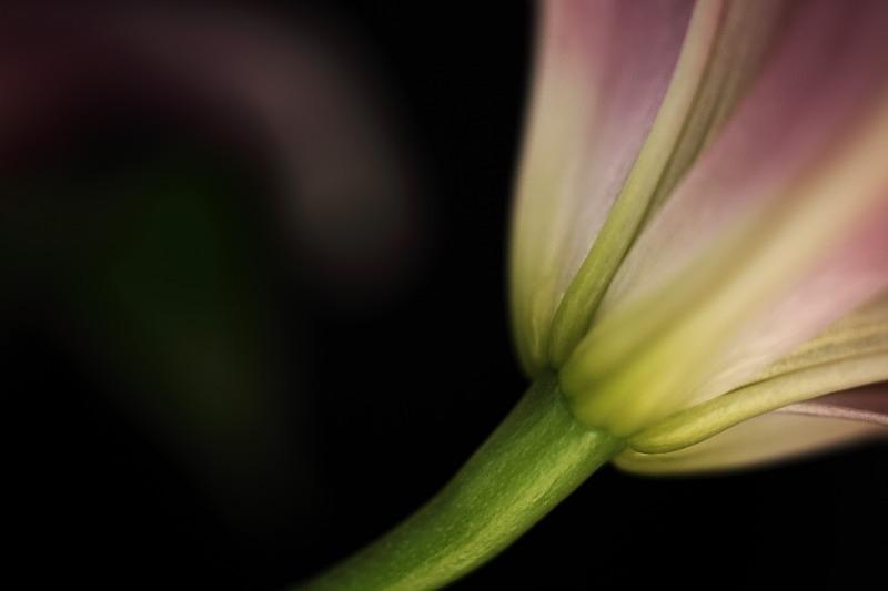 - Flora -Outdoor and Studio