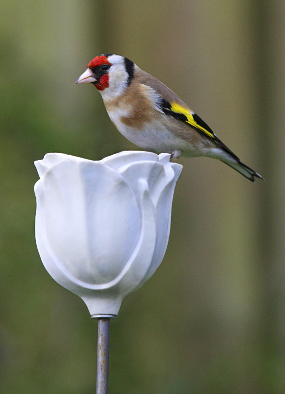 Bird Feeders - Product