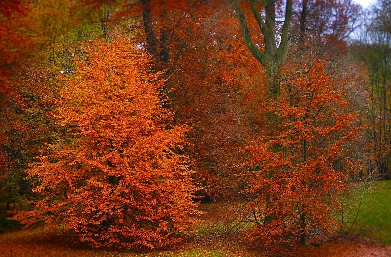 Bois de la Cambre - November 2012 - Autumn