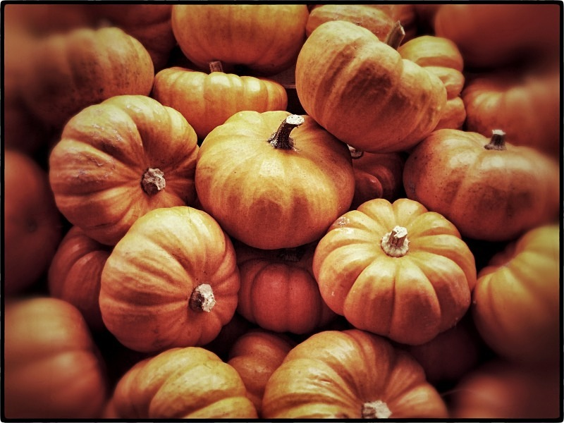 Pumpkins at a market in Uccle - Autumn