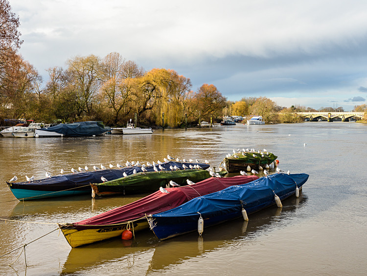 Boats on the Thames at Richmond (1) - Other locations