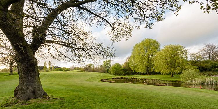 Tree on the 10th fairway (2) - The Tytherington Club