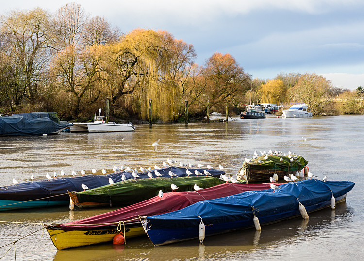 Boats on the Thames at Richmond (2) - Other locations