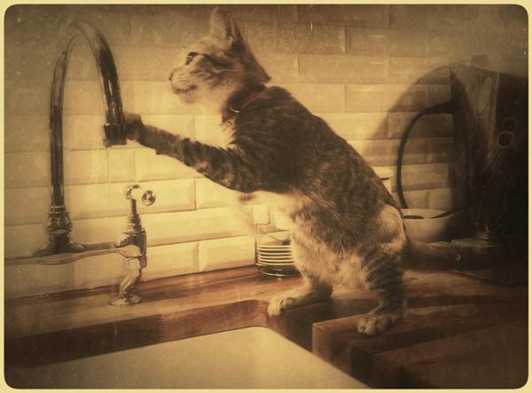 Kitten-Playing-Witih-Water-London-Pet-Sitter - Petography