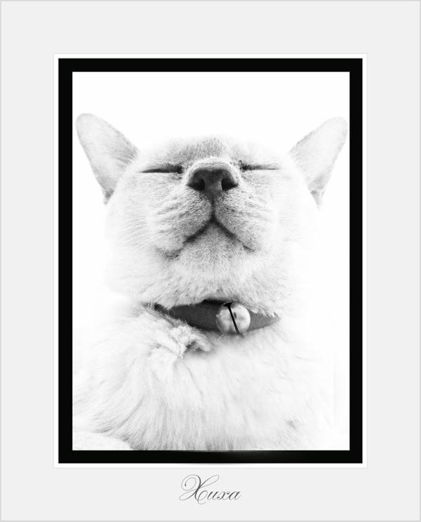 Xuxa-Cat-Sitting-Chelsea - Petography