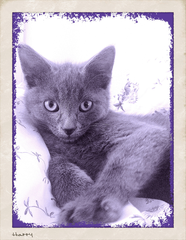 Harry-Kitten-Sitting-Hammersmith - Petography