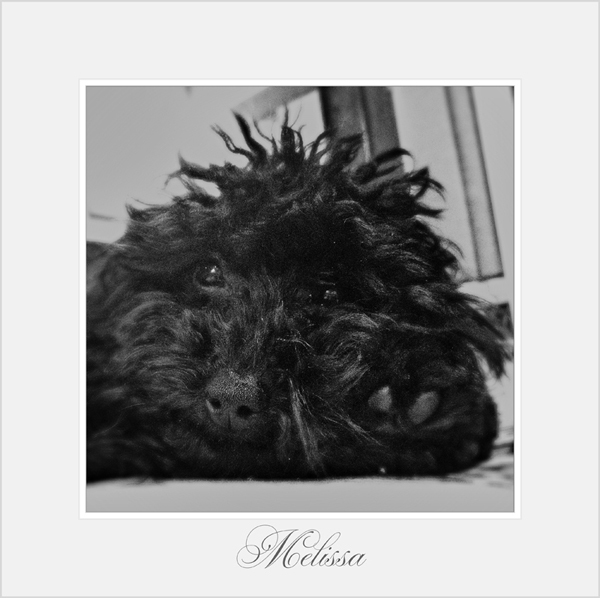 Mellisa-Hotel-Dog-Sitting-London - Petography