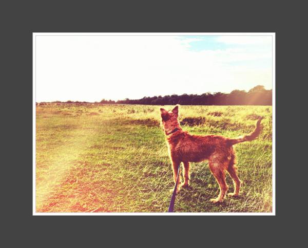 Murphy-Irish-Terrier-Puppy-Sitter-Chelsea - Petography