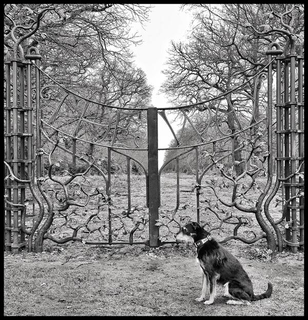 Dog-Sitter-Kensington-Biscuit - Petography