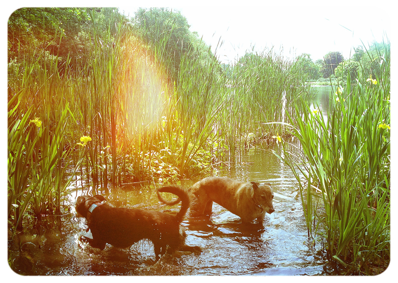 BiscuitEllie-Osterley-Gardens - Petography