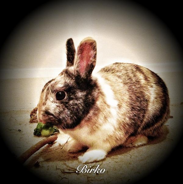 Rabbit-Care-London - Petography