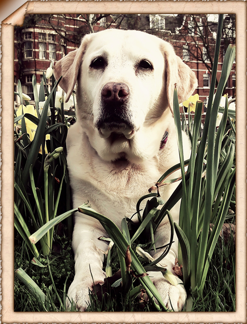 Riley-Daffodils-Dog-Day-Care-Fulham - Hunter & Riley