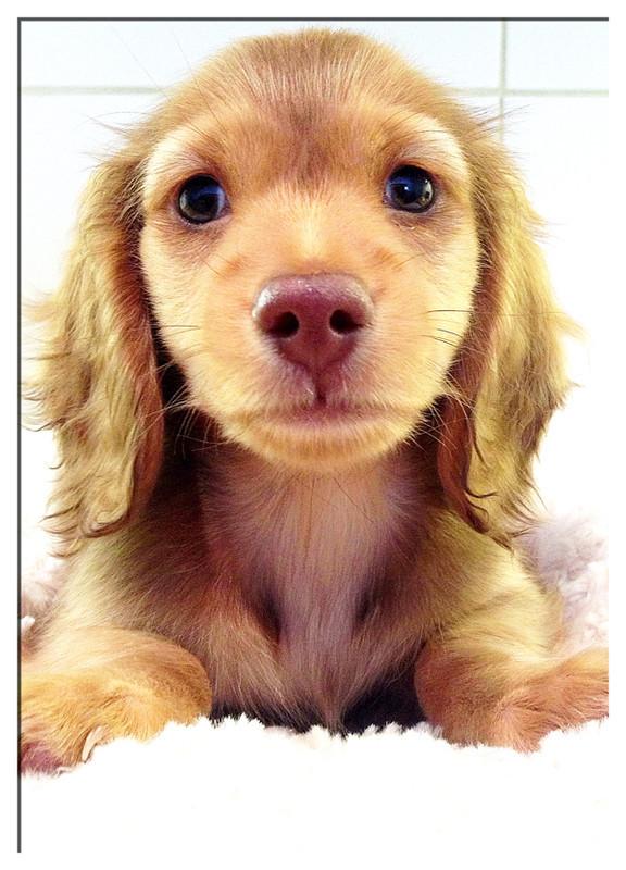 Day2-Puppy-Sitting-London - Mischa