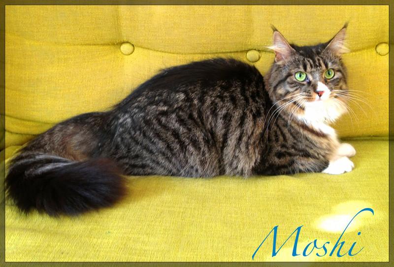 Moshi-Cat-Sitting-Fulham - Petography