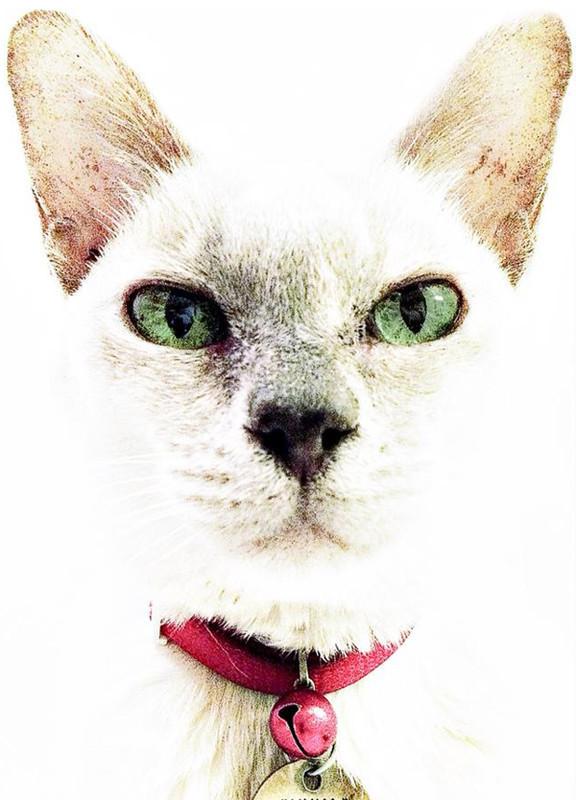 Xuxa-Cat-Sitter-Putney - Petography