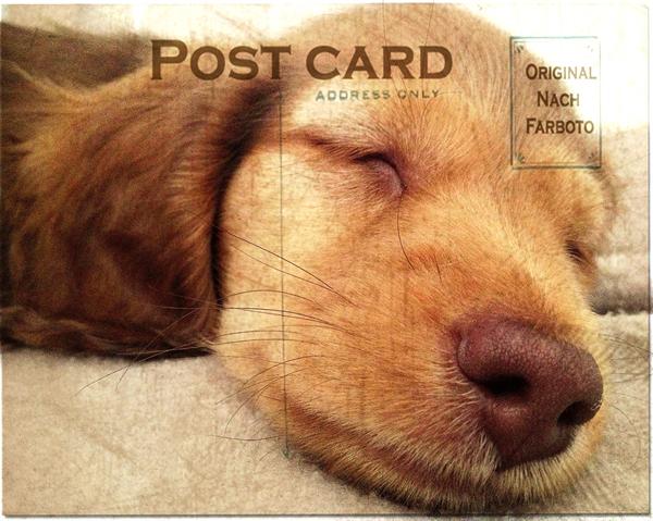 Day1-Puppy-Training-London - Mischa