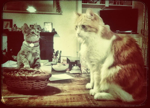 Two-Cats-Kitten-and-Sitter-Hammersmith - Petography