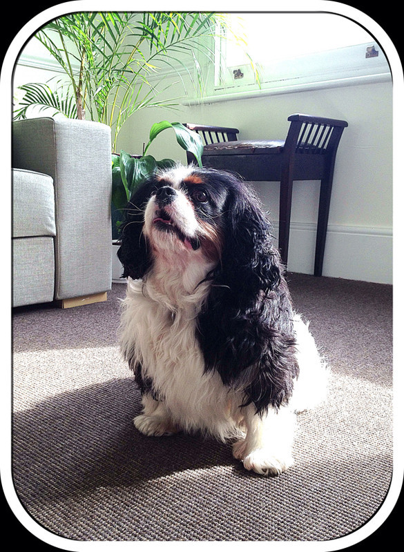 Maddie-Dog-Sitting-Chelsea - Petography