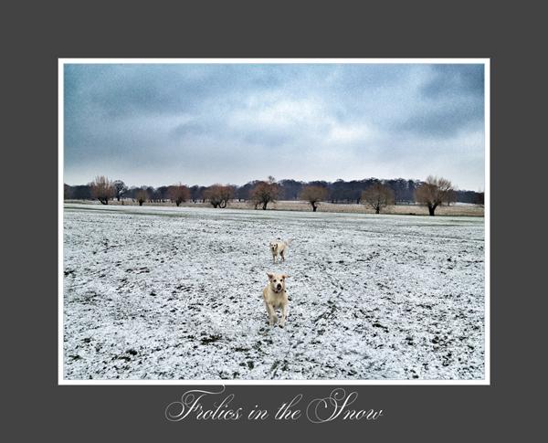 Hunter-Yellow-Labrador-Snow-Dog-Walking-London - Hunter & Riley