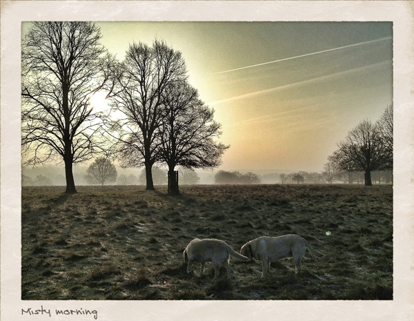 Misty-Morning-Dog-Sitting-Knightsbridge - Hunter & Riley