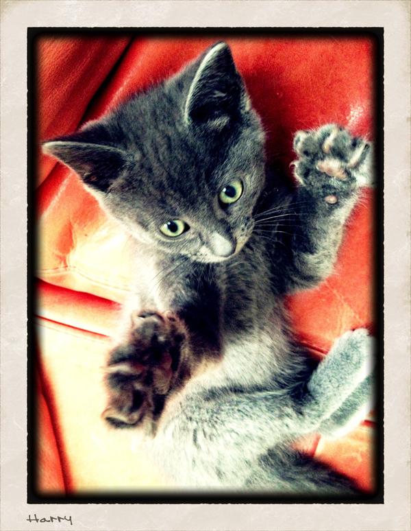 Cute-Kitten-Sitting-Pet-Care-Shepherds-Bush - Petography