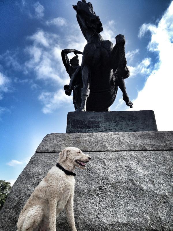Dog-walking-Kensington - Petography
