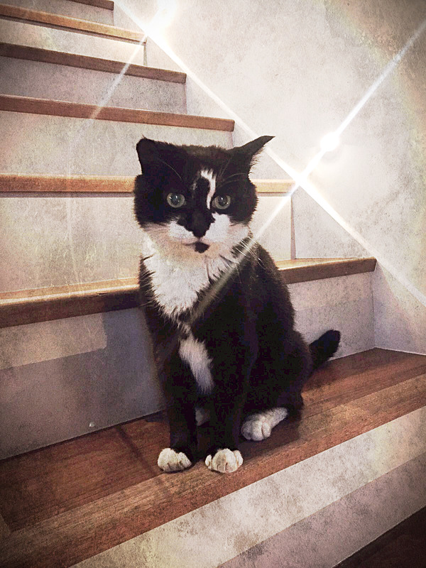 Cat-Sitting-Fulham-SW6-Lilly - Petography