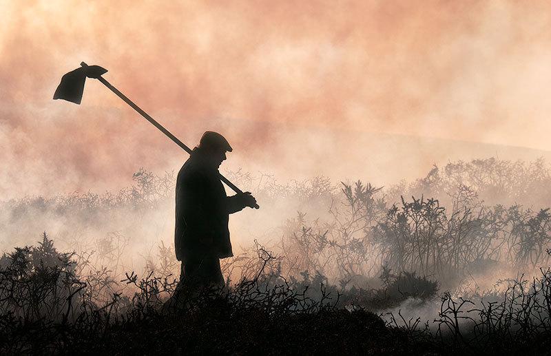 Burning the gorse (swaling), Dartmoor, Devon