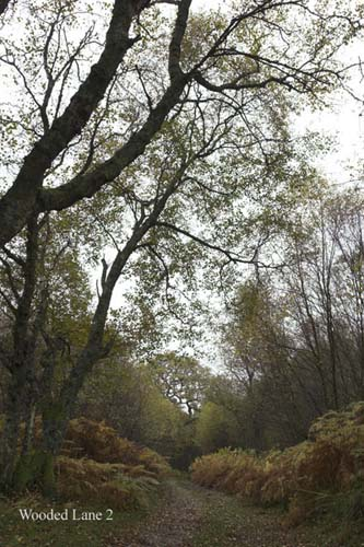 IMG_4011-01 - trees
