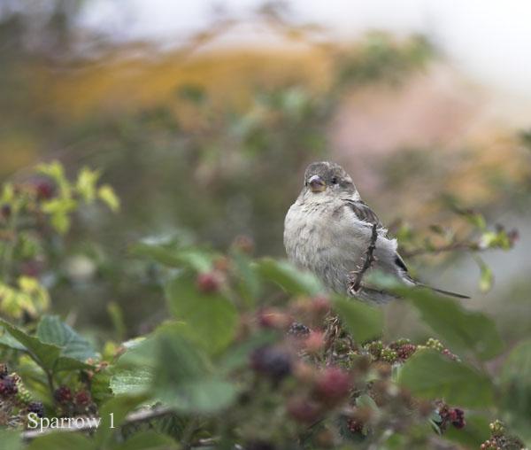 IMG_8696-01 - Birds: WIld