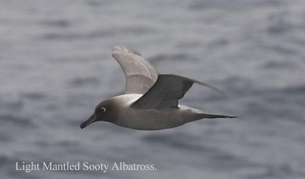 ant000216 - Antarctica 2